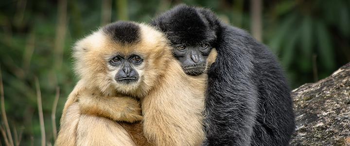 04/05: Direitos Animais será tema de abertura de Semana Jurídica em Alta Floresta/MT