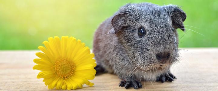 2 e 03/06: Direitos Animais e Bioética serão discutidos na Semana do Meio Ambiente de Antonina (PR)
