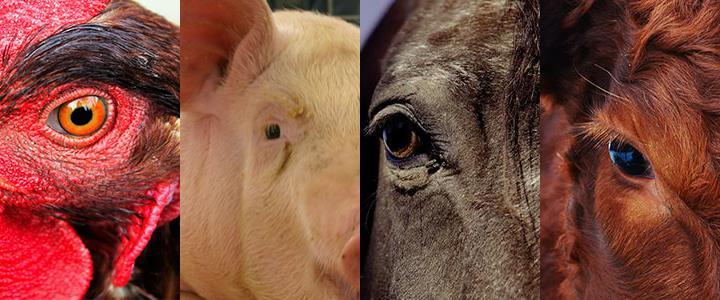31/10 e 01/11: Direitos Animais será tema de palestras em Parnaíba (PI) e Maceió (AL)
