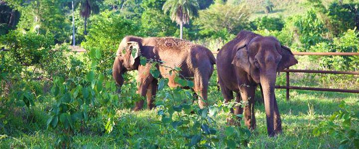 Após 40 anos em cativeiro, duas hóspedes inauguram o primeiro Santuário de Elefantes brasileiro