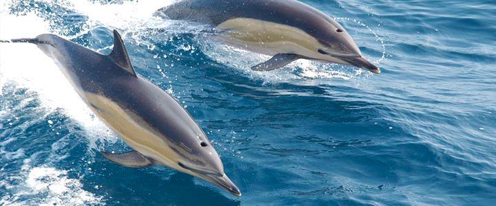 Aquário Nacional de Baltimore, nos EUA, anuncia fim da exibição de golfinhos