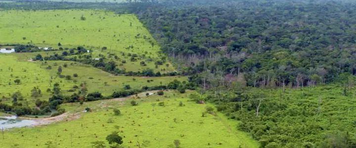 Área desmatada na Amazônia para pastos que foram abandonados equivale à região Sul do Brasil