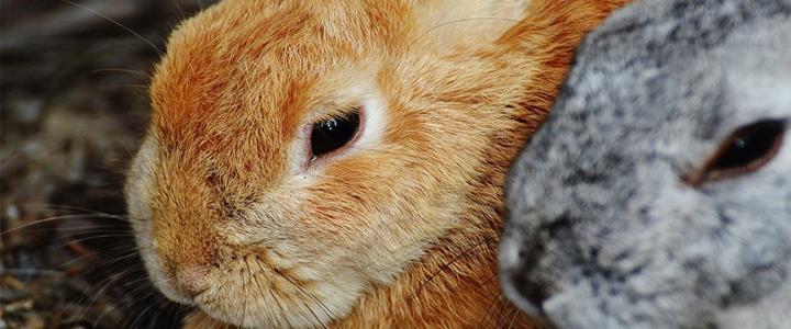 Austrália decide banir produtos testados em animais