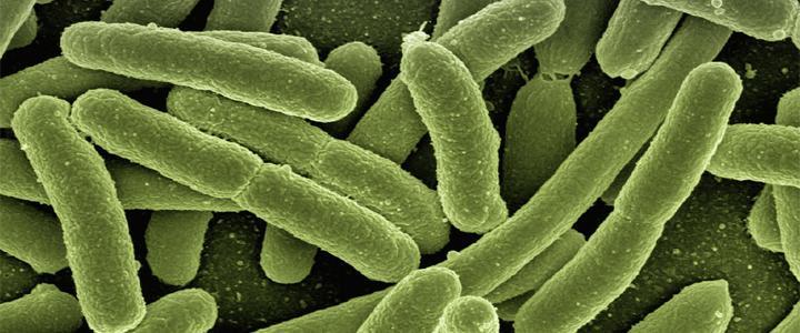 Carne é apontada como fonte de nova superbactéria resistente a antibióticos