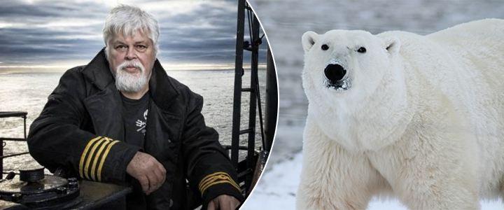 Greenpeace está apoiando caça de ursos polares, denuncia Capitão Paul Watson