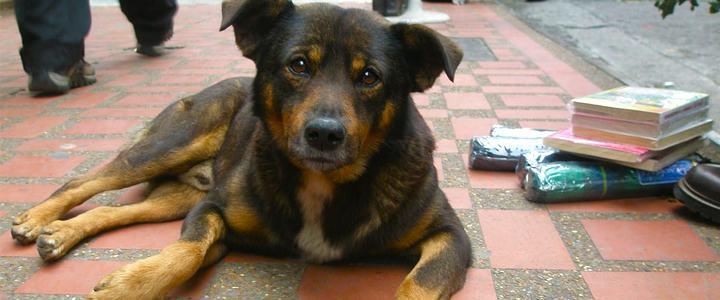 Holanda é o primeiro país a não ter mais cães nas ruas