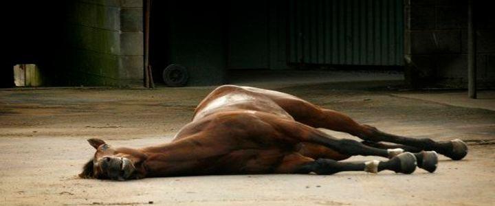 Petição online pede o fim dos esportes olímpicos que usam animais
