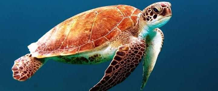 Primeira estação de mineração no fundo do oceano pode se tornar real e ameaçar várias espécies