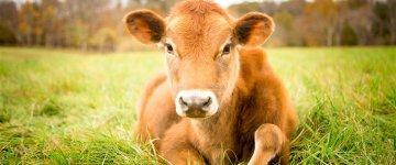 1º de Novembro: Dia Mundial do Veganismo