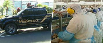 Empresas do setor pecuário são alvo da maior operação já realizada pela Polícia Federal