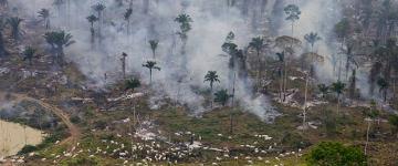 Humanidade já esgotou sua cota de recursos naturais deste ano, afirmam ONGs