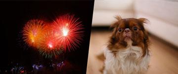 Ideia legislativa no site do Senado pede proibição de fogos de artifício sonoros