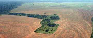 Por que toda essa preocupação com a Amazônia agora?