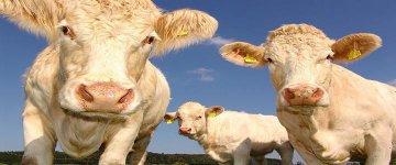 Quantas pessoas vegetarianas e veganas existem no Brasil?