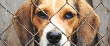 Uso de animais em testes, ensino e pesquisa pode estar perto do fim no Brasil
