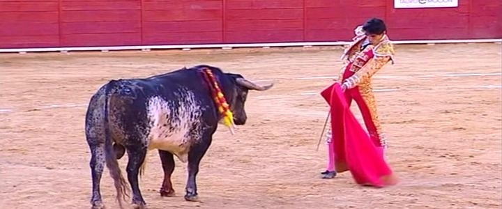 Toureiro espanhol morre após ser golpeado no peito pelo touro