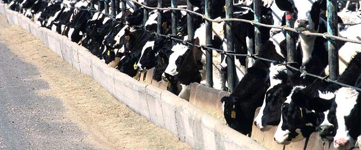Vírus que ataca bovinos pode estar relacionado à microcefalia, aponta pesquisa