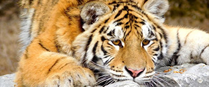 Zoológico no Canadá será fechado por falta de público